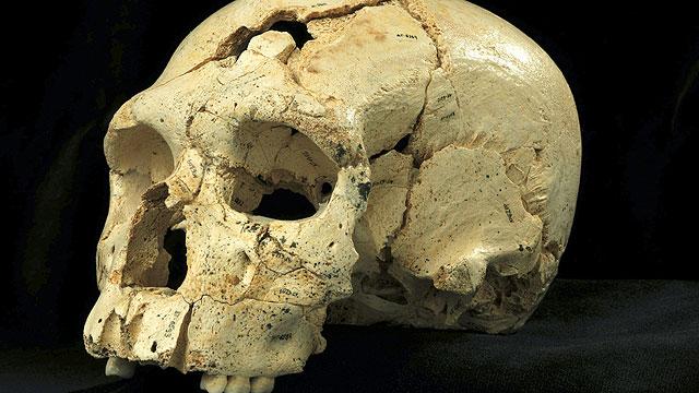 Neandertales en Atapuerca y genoma del hombre moderno