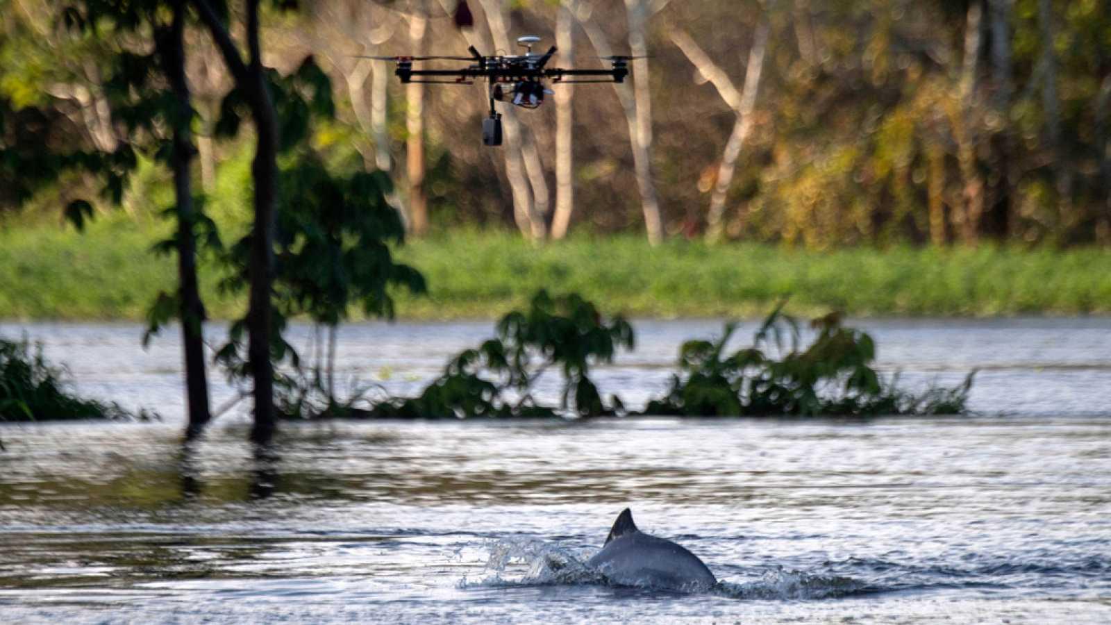 Drones para preservar a los delfines del Amazonas
