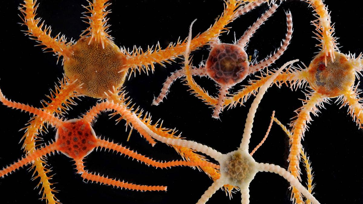 La vida microscópica de la Antártida