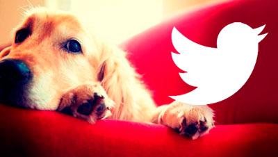 """Twitter """"La meva mascota i jo"""""""