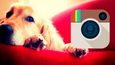 """Instagram de """"La meva mascota i jo"""""""