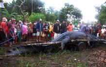 El cocodrilo no será sacrificado, sino que será trasladado a un parque natural