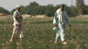 Ver vídeo  'El 90% del opio que se consume en todo el mundo viene de Afganistán'