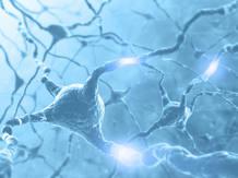 Los investigadores han descubierto en este trabajo una nueva función biológica de unas enzimas llamadas caspasas