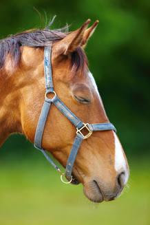 Los caballos también pueden dormir de pie, pero esta postura no les permite hacerlo profundamente