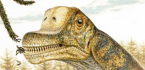 10 foto animal terrestre desconocido: