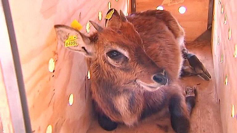Cataluña busca compradores para los animales de un zoo