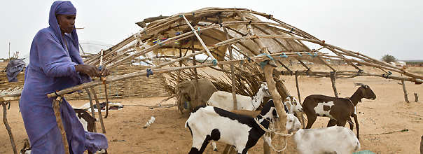 Apostar por la resiliencia o cómo acabar con el ciclo del hambre en el Sahel