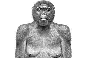 Ver v?deo  'Así andaba 'Ardi', un homínido de 4,4 millones de años'
