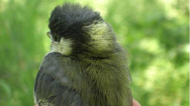 Las aves los prefieren guapos