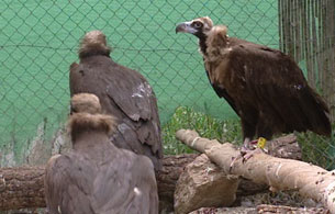 Ver v?deo  'Las aves migratorias están sufriendo cambios a causa del calentamiento global'