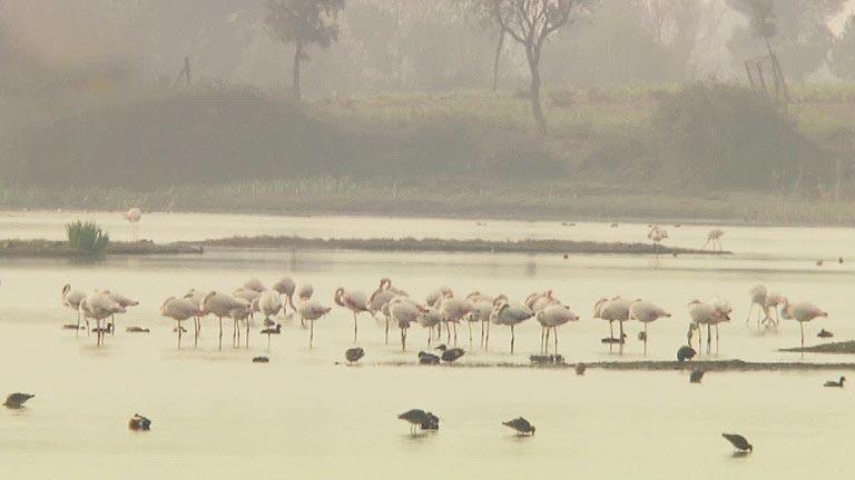 Baja el nivel freático de los acuíferos de Doñana