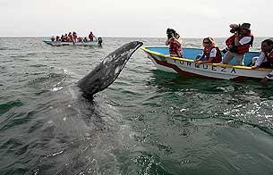 Ver vídeo  'Las ballenas amenazadas por el cambio climático y el narcotráfico'