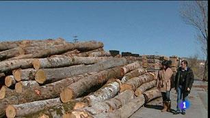 Ver vídeo  'Barricas de roble español, una iniciativa sostenible'