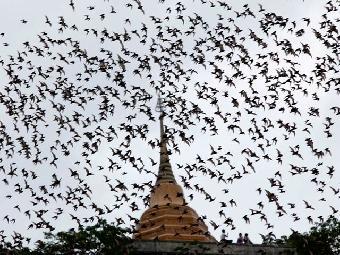 Ver vídeo  'Biodiario - Los murciélagos'
