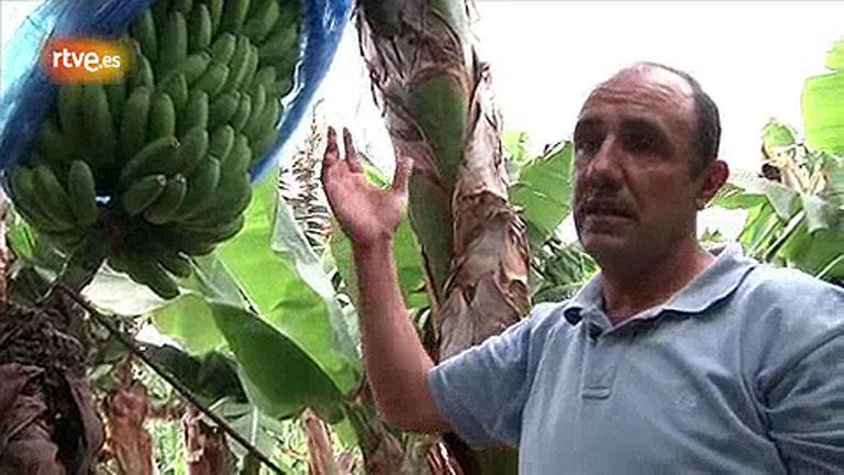 Conectando España - Buenavista del Norte - Elaboración del plátano