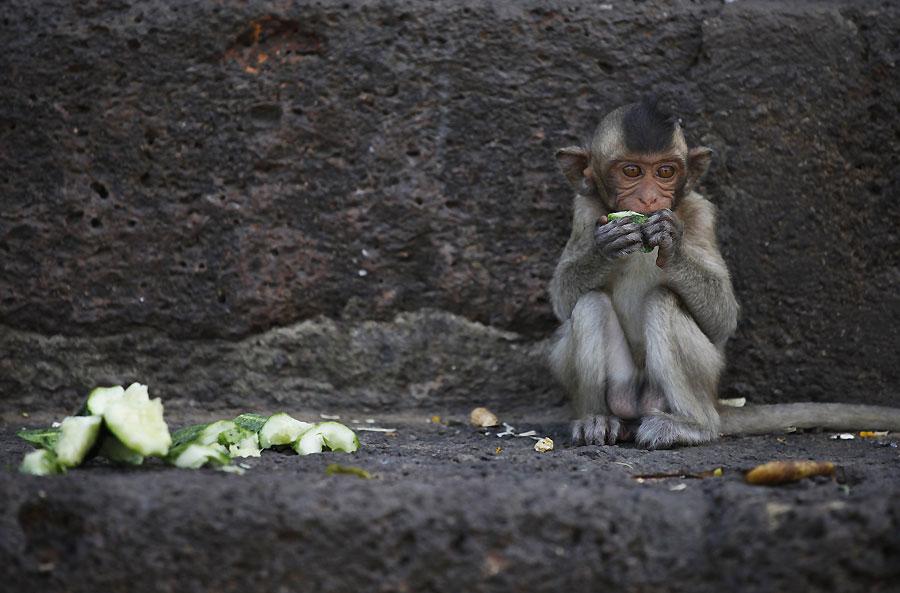 Un bufet para dar las gracias a los monos