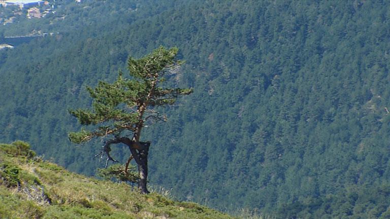 Nuestros parques nacionales ya acusan los efectos del cambio climático