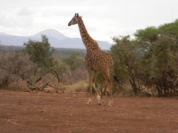 De camino al parque de Amboseli - Buscamundos