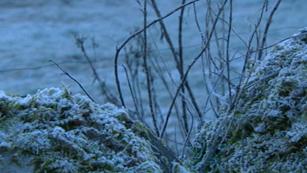 Ver vídeo  'El campo se resiente de las heladas y la sequía de febrero'