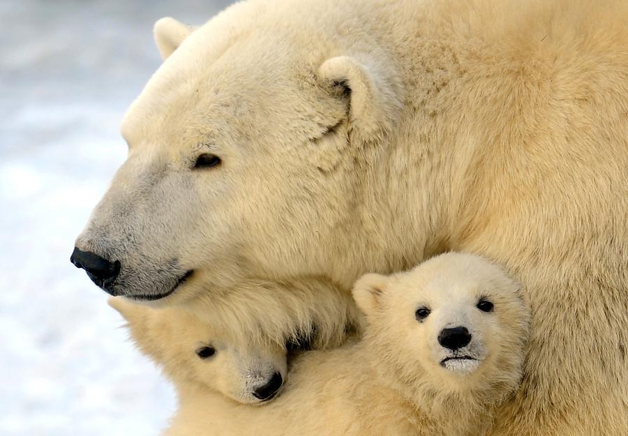 Cariño materno