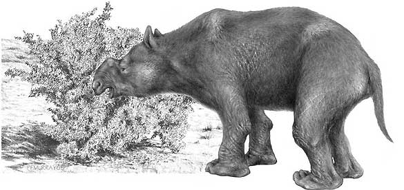 Un mega-marsupial hervívoro, el 'Diprotodon optatum'.