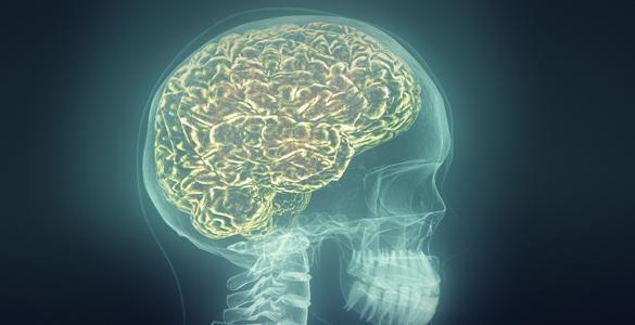 La nueva técnica desarrollada por el CSIC permite la lectura de la actividad eléctrica de varias zonas del interior del cerebro