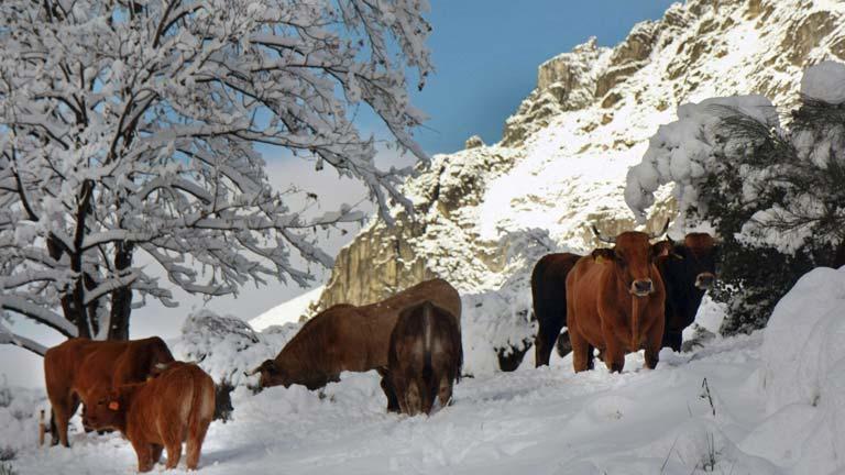 Chubascos y viento fuerte en Baleares, nevadas en el extremo norte