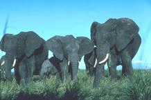 Ciencuenta y tres kilómetros de la carretera atravesarán el Parque Nacional de Serengeti