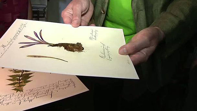 Conectando España - Puebla de Sanabria: Coleccionistas de plantas