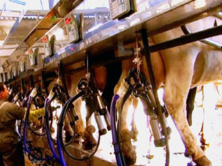 Ver vídeo  'Comando Actualidad - Barato, barato - El precio de la leche'