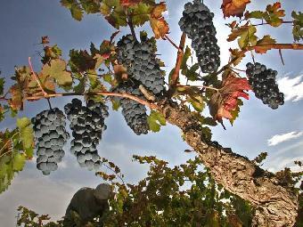 Ver vídeo  'Comando Actualidad - De vinos'