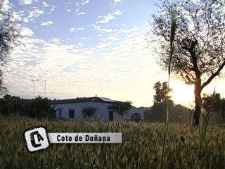 Ver vídeo  'Comando Actualidad - Viviendo en Doñana'