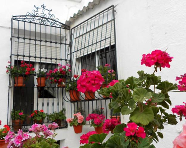 Conectando España - Abla - Ventanal con flores