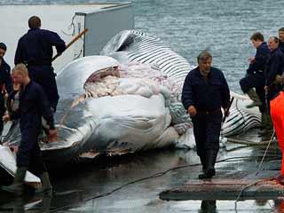 Ver vídeo  'Continúa la caza de ballenas'