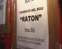 Cartel de la exhibici&oacute;n del toro rat&oacute;n, en Canals