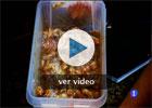 Costillas con salsa de kiwi y pera, por Jung