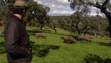 cuidando-los-cerdos-ibricos