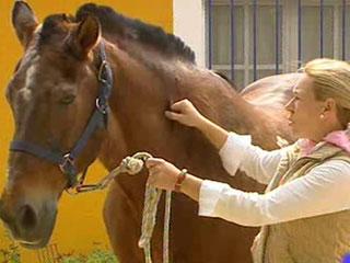 Ver vídeo  'Cuidar al caballo en El Rocío'
