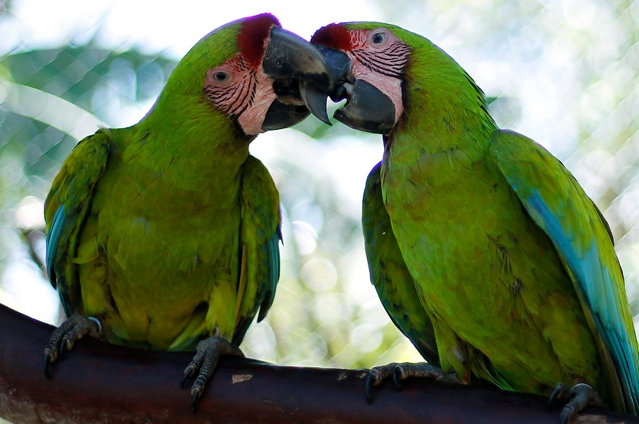 ¿Me das un beso?