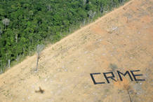 La deforestación es la principal causa de la aceleración de la pérdida de biodiversidad.