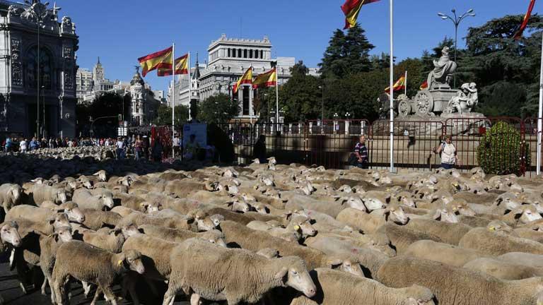 Más de 2.000 ovejas recuerdan en Madrid el papel de la ganadería en España