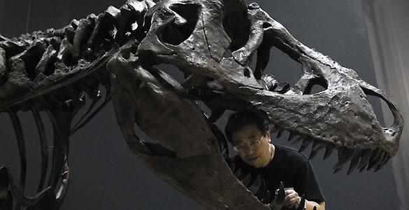 El bocado de estos dinosaurios es casi tres veces más potente que el de un cocodrilo del Nilo