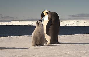 Ver v?deo  'Diez especies emblemáticas, amenazadas por el cambio climático'