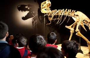 Ver vídeo  'Dinosaurios. Tesoros del desierto del Gobi.'