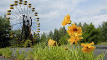 Documenta2 - Chernóbil, ¿una historia natural? Un enigma radioactivo