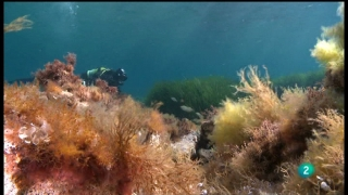 Ver vídeo  'El documental - Asedio a la posidonia'