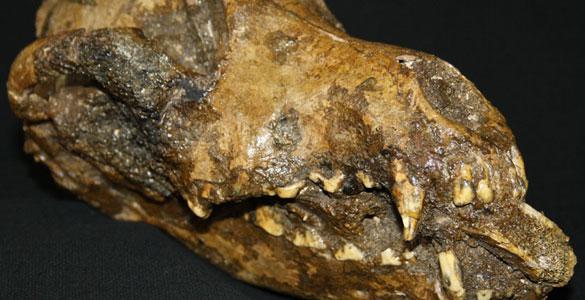Los perros pudieron ser enterrados siguiendo un ritual de la época