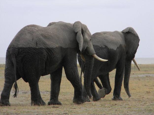 Los elefantes salan de darse un baño - Buscamundos
