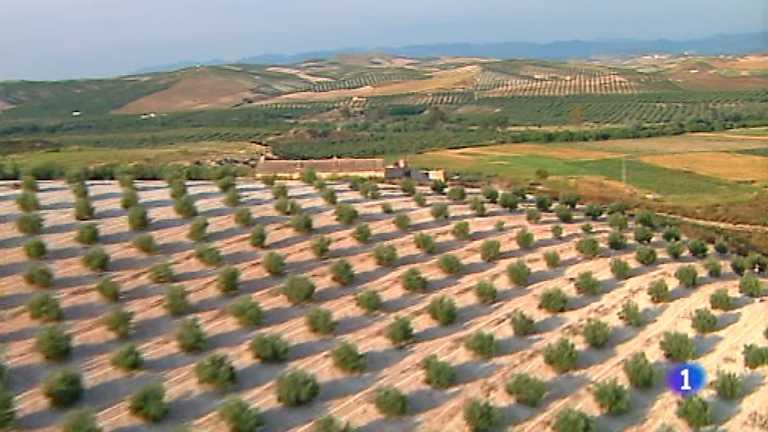 España, entre el cielo y la Tierra - Entre olivos